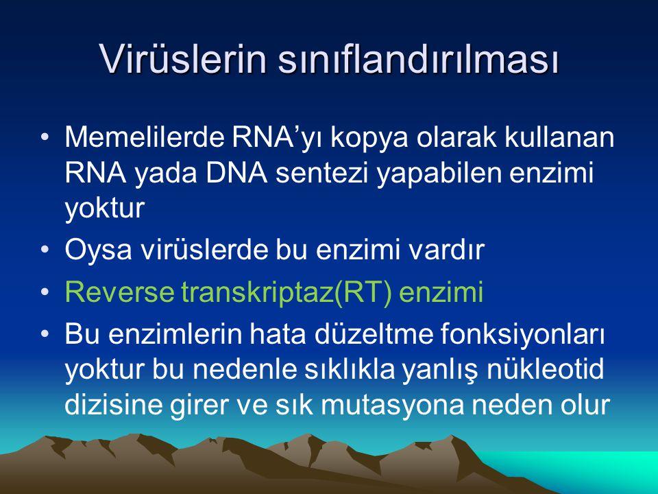 Virüslerin sınıflandırılması Memelilerde RNA'yı kopya olarak kullanan RNA yada DNA sentezi yapabilen enzimi yoktur Oysa virüslerde bu enzimi vardır Reverse transkriptaz(RT) enzimi Bu enzimlerin hata düzeltme fonksiyonları yoktur bu nedenle sıklıkla yanlış nükleotid dizisine girer ve sık mutasyona neden olur