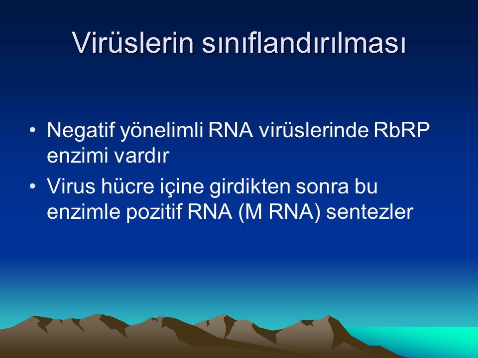 Virüslerin sınıflandırılması Negatif yönelimli RNA virüslerinde RbRP enzimi vardır Virus hücre içine girdikten sonra bu enzimle pozitif RNA (M RNA) sentezler