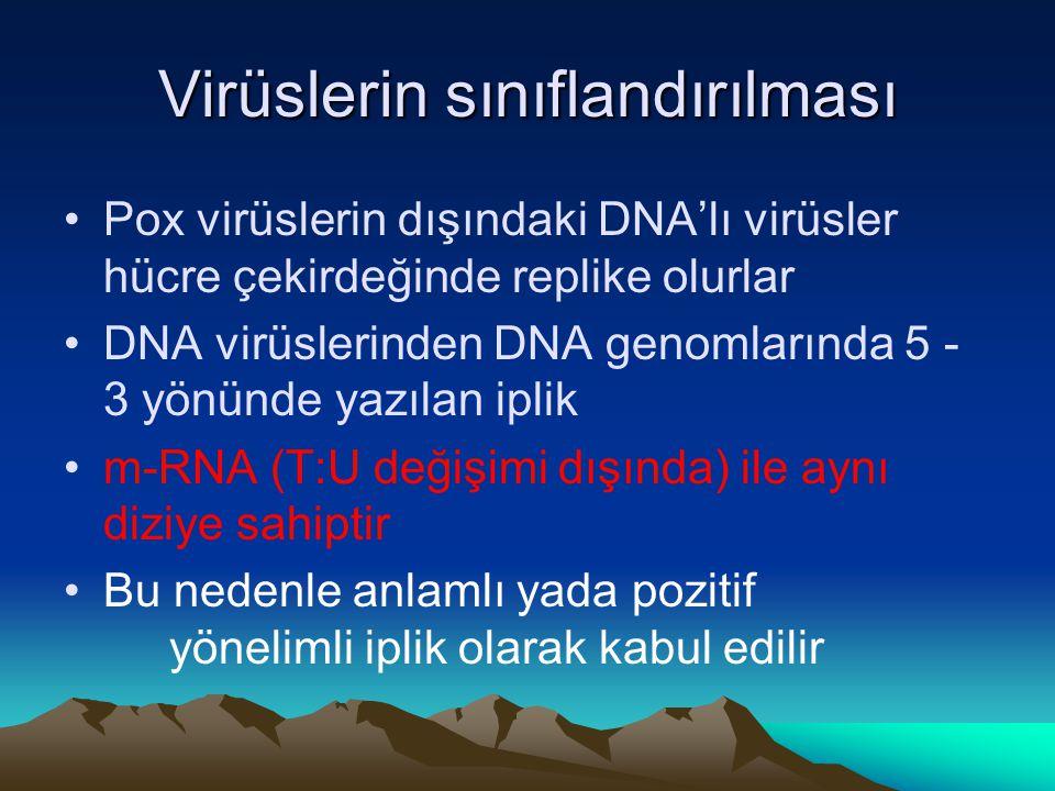 Virüslerin sınıflandırılması Pox virüslerin dışındaki DNA'lı virüsler hücre çekirdeğinde replike olurlar DNA virüslerinden DNA genomlarında 5 - 3 yönünde yazılan iplik m-RNA (T:U değişimi dışında) ile aynı diziye sahiptir Bu nedenle anlamlı yada pozitif yönelimli iplik olarak kabul edilir