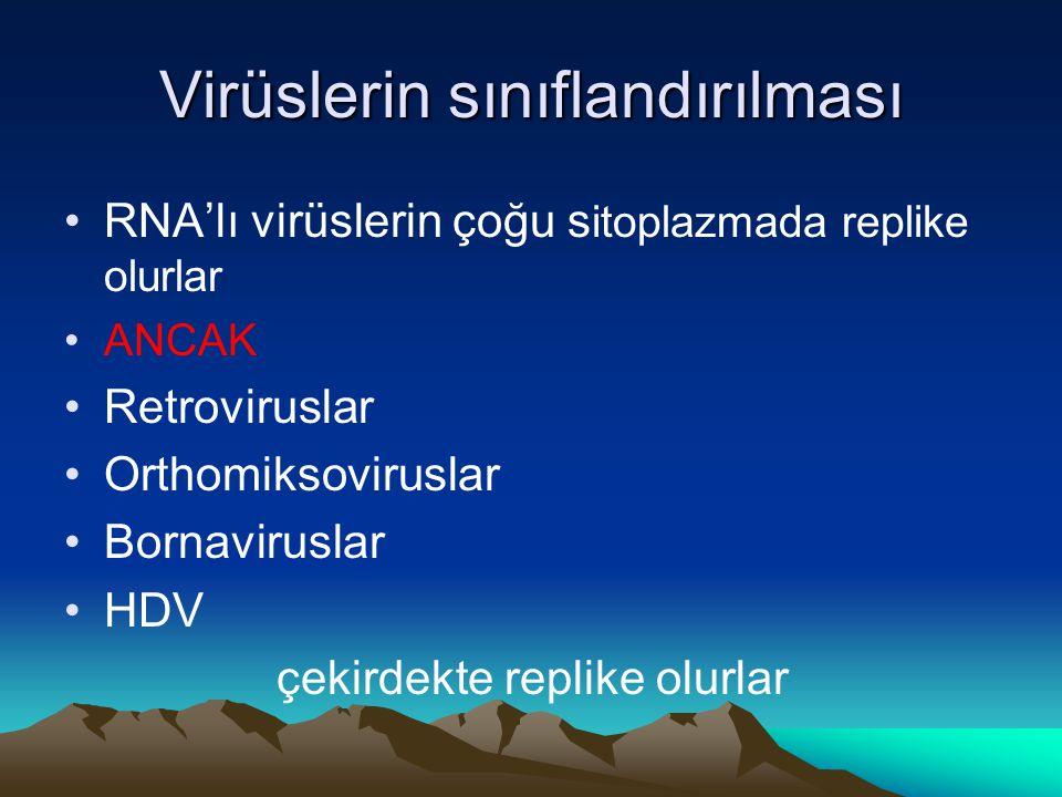 Virüslerin sınıflandırılması RNA'lı virüslerin çoğu s itoplazmada replike olurlar ANCAK Retroviruslar Orthomiksoviruslar Bornaviruslar HDV çekirdekte replike olurlar