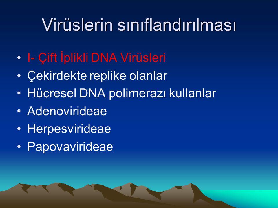 Virüslerin sınıflandırılması I- Çift İplikli DNA Virüsleri Çekirdekte replike olanlar Hücresel DNA polimerazı kullanlar Adenovirideae Herpesvirideae Papovavirideae