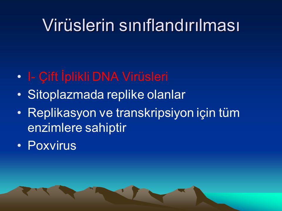 Virüslerin sınıflandırılması I- Çift İplikli DNA Virüsleri Sitoplazmada replike olanlar Replikasyon ve transkripsiyon için tüm enzimlere sahiptir Poxv