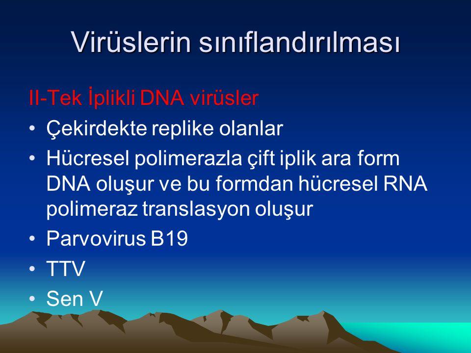 Virüslerin sınıflandırılması II-Tek İplikli DNA virüsler Çekirdekte replike olanlar Hücresel polimerazla çift iplik ara form DNA oluşur ve bu formdan hücresel RNA polimeraz translasyon oluşur Parvovirus B19 TTV Sen V