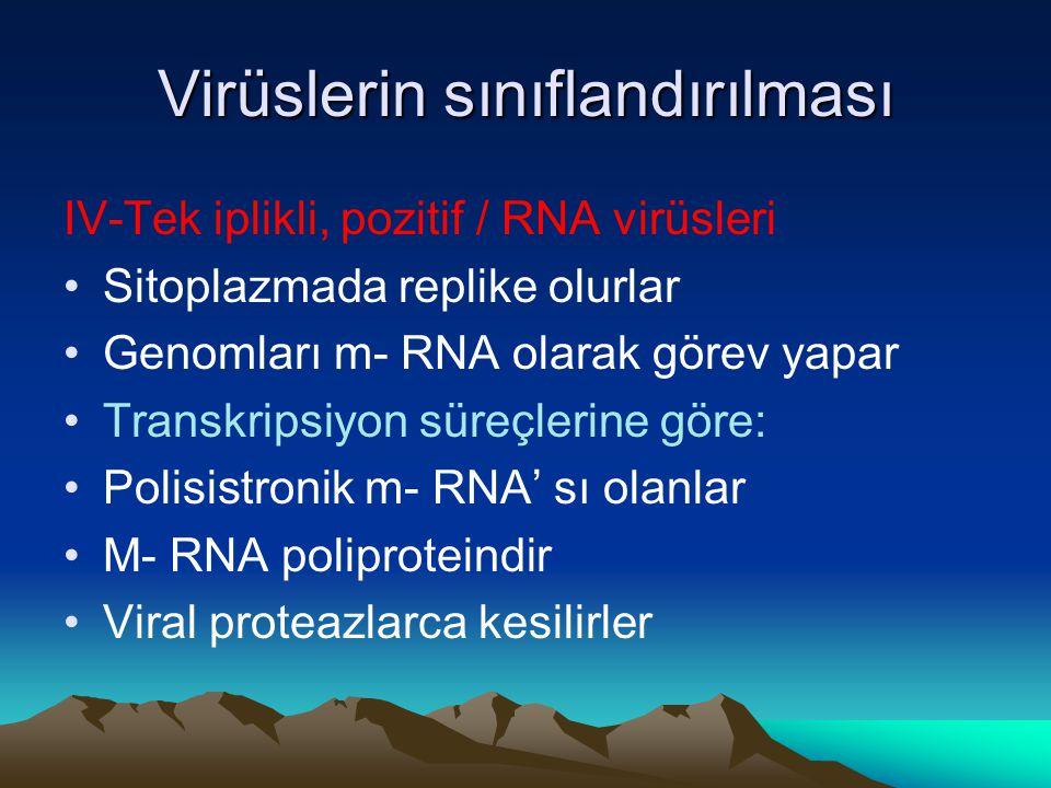 Virüslerin sınıflandırılması IV-Tek iplikli, pozitif / RNA virüsleri Sitoplazmada replike olurlar Genomları m- RNA olarak görev yapar Transkripsiyon süreçlerine göre: Polisistronik m- RNA' sı olanlar M- RNA poliproteindir Viral proteazlarca kesilirler