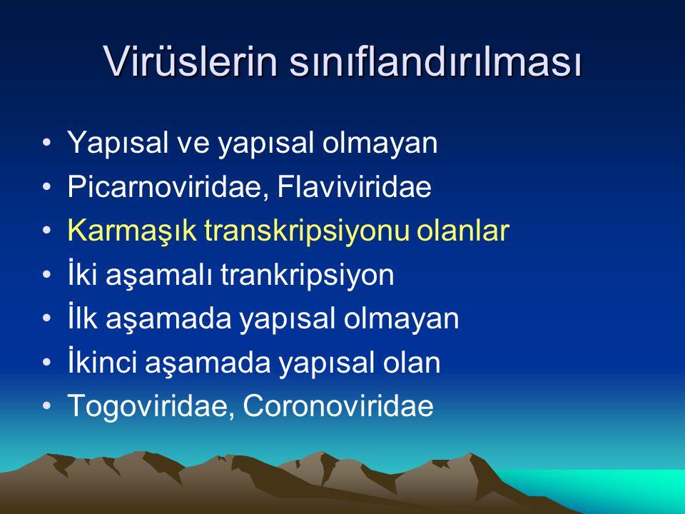 Virüslerin sınıflandırılması Yapısal ve yapısal olmayan Picarnoviridae, Flaviviridae Karmaşık transkripsiyonu olanlar İki aşamalı trankripsiyon İlk aşamada yapısal olmayan İkinci aşamada yapısal olan Togoviridae, Coronoviridae