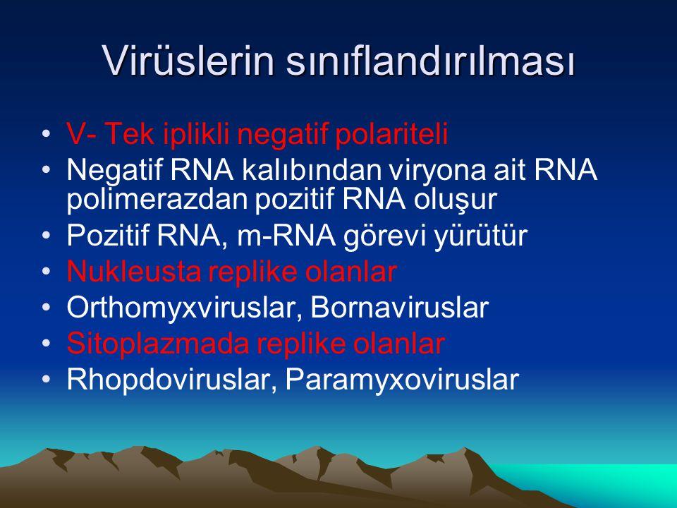 Virüslerin sınıflandırılması V- Tek iplikli negatif polariteli Negatif RNA kalıbından viryona ait RNA polimerazdan pozitif RNA oluşur Pozitif RNA, m-RNA görevi yürütür Nukleusta replike olanlar Orthomyxviruslar, Bornaviruslar Sitoplazmada replike olanlar Rhopdoviruslar, Paramyxoviruslar