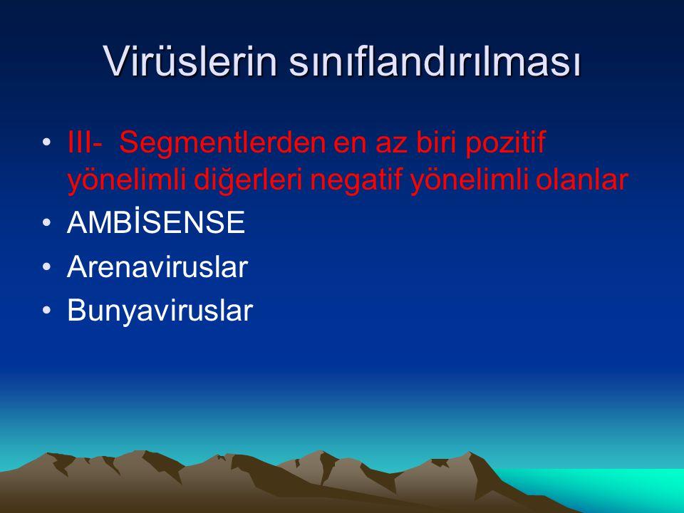 Virüslerin sınıflandırılması III- Segmentlerden en az biri pozitif yönelimli diğerleri negatif yönelimli olanlar AMBİSENSE Arenaviruslar Bunyaviruslar