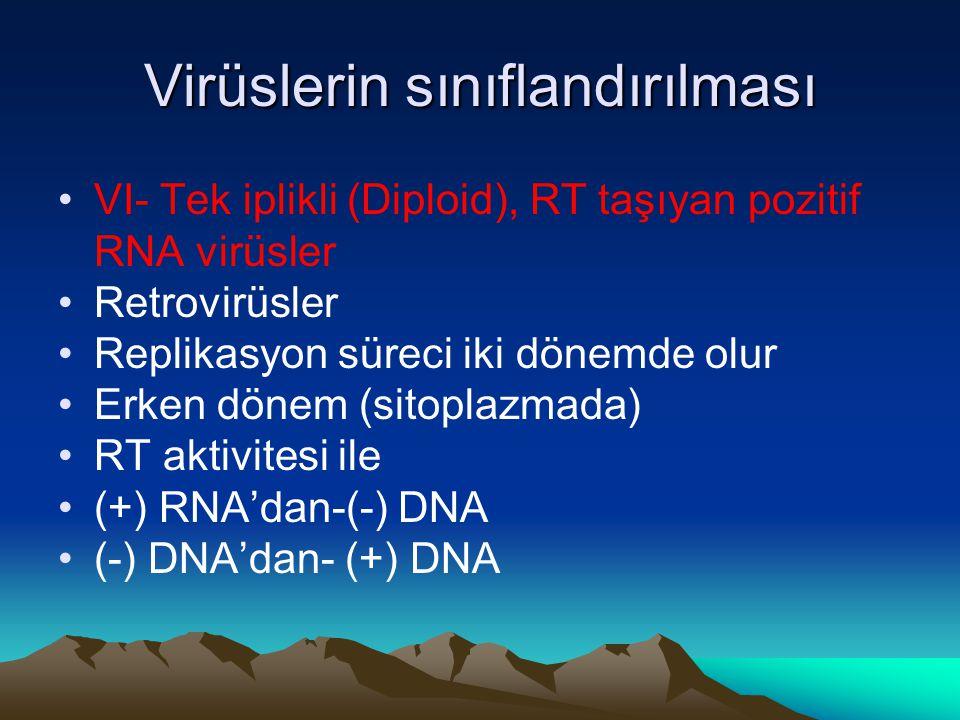 Virüslerin sınıflandırılması VI- Tek iplikli (Diploid), RT taşıyan pozitif RNA virüsler Retrovirüsler Replikasyon süreci iki dönemde olur Erken dönem (sitoplazmada) RT aktivitesi ile (+) RNA'dan-(-) DNA (-) DNA'dan- (+) DNA