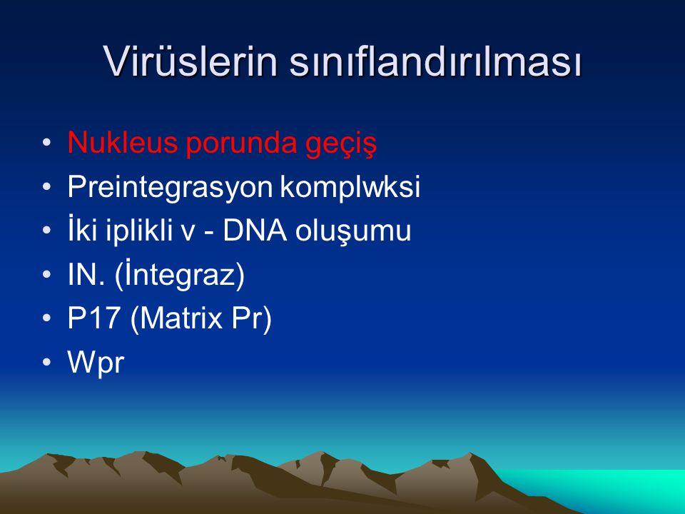 Virüslerin sınıflandırılması Nukleus porunda geçiş Preintegrasyon komplwksi İki iplikli v - DNA oluşumu IN. (İntegraz) P17 (Matrix Pr) Wpr