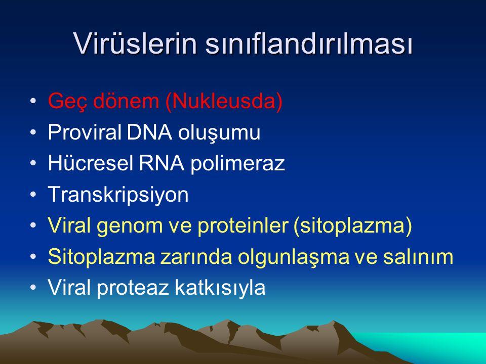 Virüslerin sınıflandırılması Geç dönem (Nukleusda) Proviral DNA oluşumu Hücresel RNA polimeraz Transkripsiyon Viral genom ve proteinler (sitoplazma) Sitoplazma zarında olgunlaşma ve salınım Viral proteaz katkısıyla