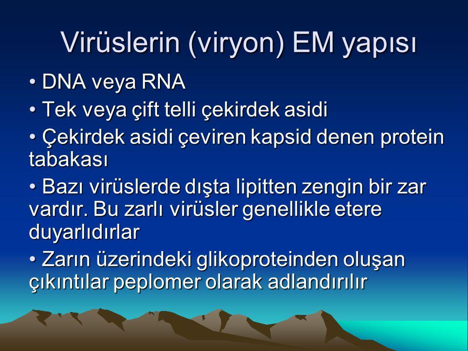 Virüslerin (viryon) EM yapısı DNA veya RNA DNA veya RNA Tek veya çift telli çekirdek asidi Tek veya çift telli çekirdek asidi Çekirdek asidi çeviren k