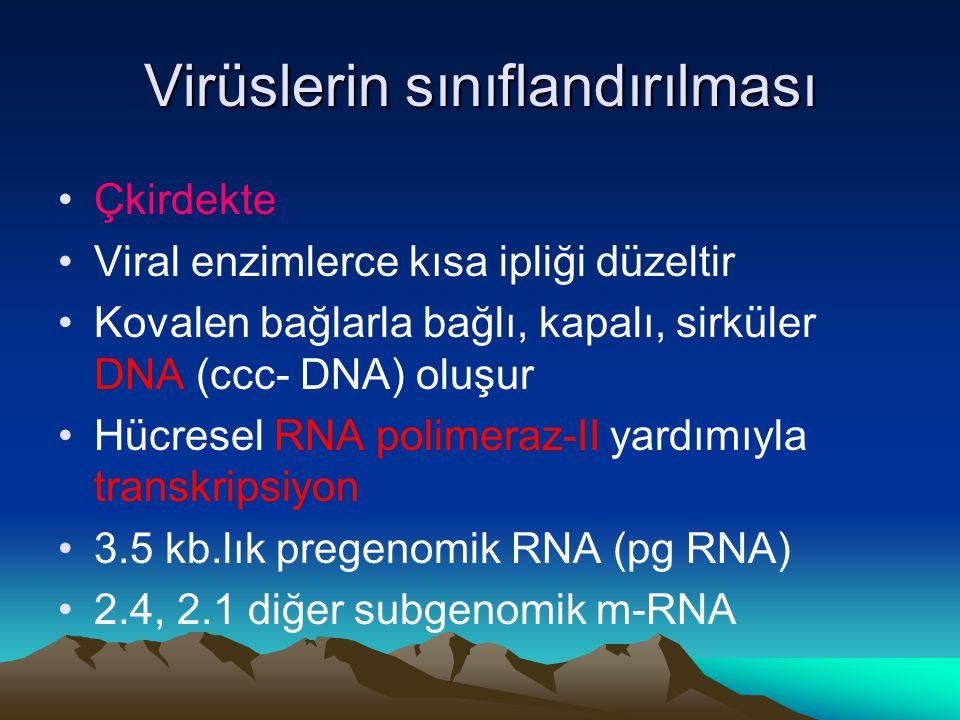 Virüslerin sınıflandırılması Çkirdekte Viral enzimlerce kısa ipliği düzeltir Kovalen bağlarla bağlı, kapalı, sirküler DNA (ccc- DNA) oluşur Hücresel RNA polimeraz-II yardımıyla transkripsiyon 3.5 kb.lık pregenomik RNA (pg RNA) 2.4, 2.1 diğer subgenomik m-RNA