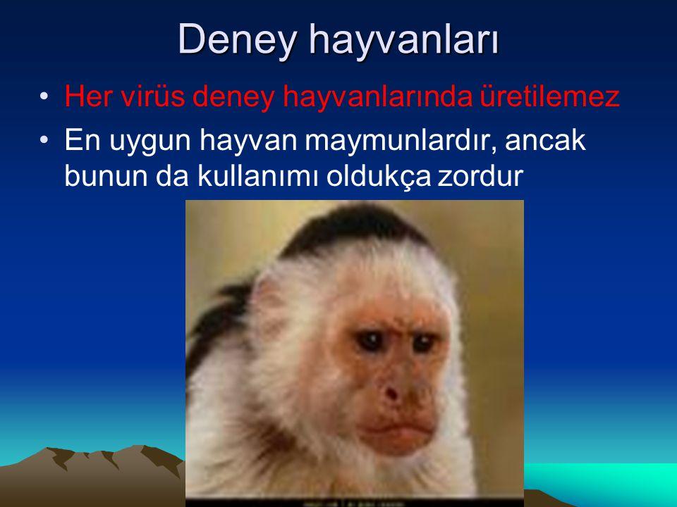 Deney hayvanları Her virüs deney hayvanlarında üretilemez En uygun hayvan maymunlardır, ancak bunun da kullanımı oldukça zordur