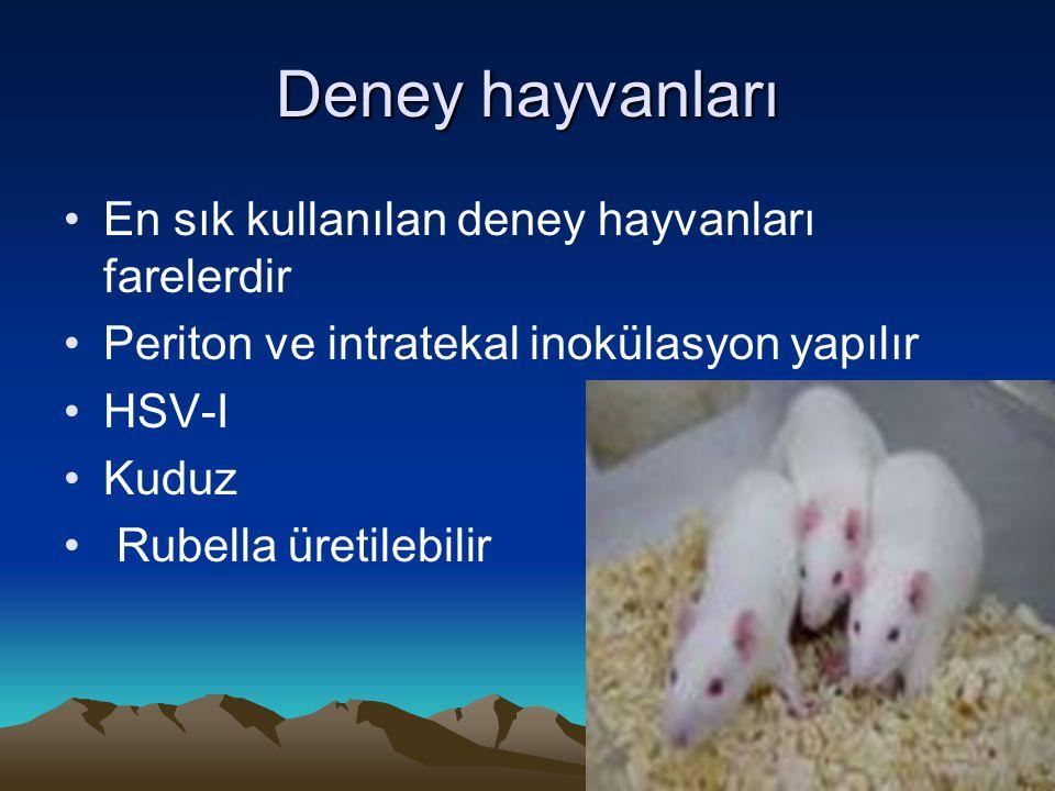 Deney hayvanları En sık kullanılan deney hayvanları farelerdir Periton ve intratekal inokülasyon yapılır HSV-I Kuduz Rubella üretilebilir