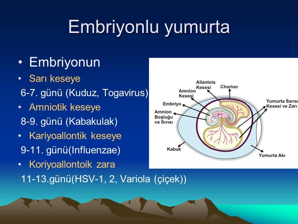 Embriyonlu yumurta Embriyonun Sarı keseye 6-7. günü (Kuduz, Togavirus) Amniotik keseye 8-9. günü (Kabakulak) Kariyoallontik keseye 9-11. günü(Influenz