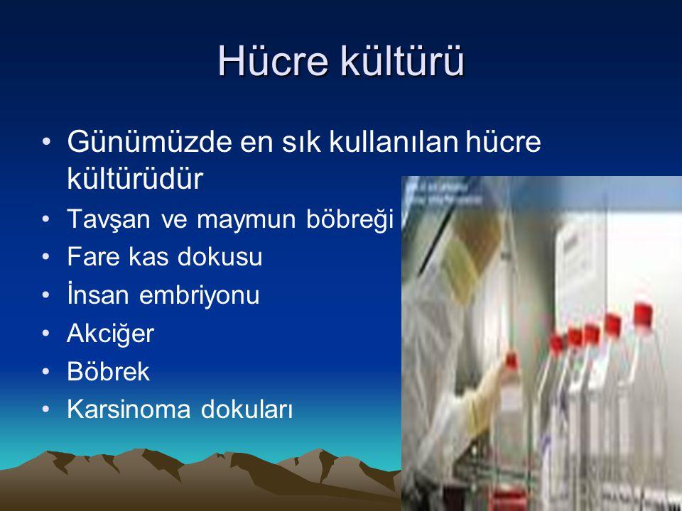 Hücre kültürü Günümüzde en sık kullanılan hücre kültürüdür Tavşan ve maymun böbreği Fare kas dokusu İnsan embriyonu Akciğer Böbrek Karsinoma dokuları