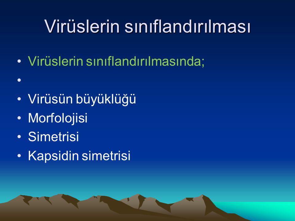 Virüslerin sınıflandırılması Virüslerin sınıflandırılmasında; Virüsün büyüklüğü Morfolojisi Simetrisi Kapsidin simetrisi