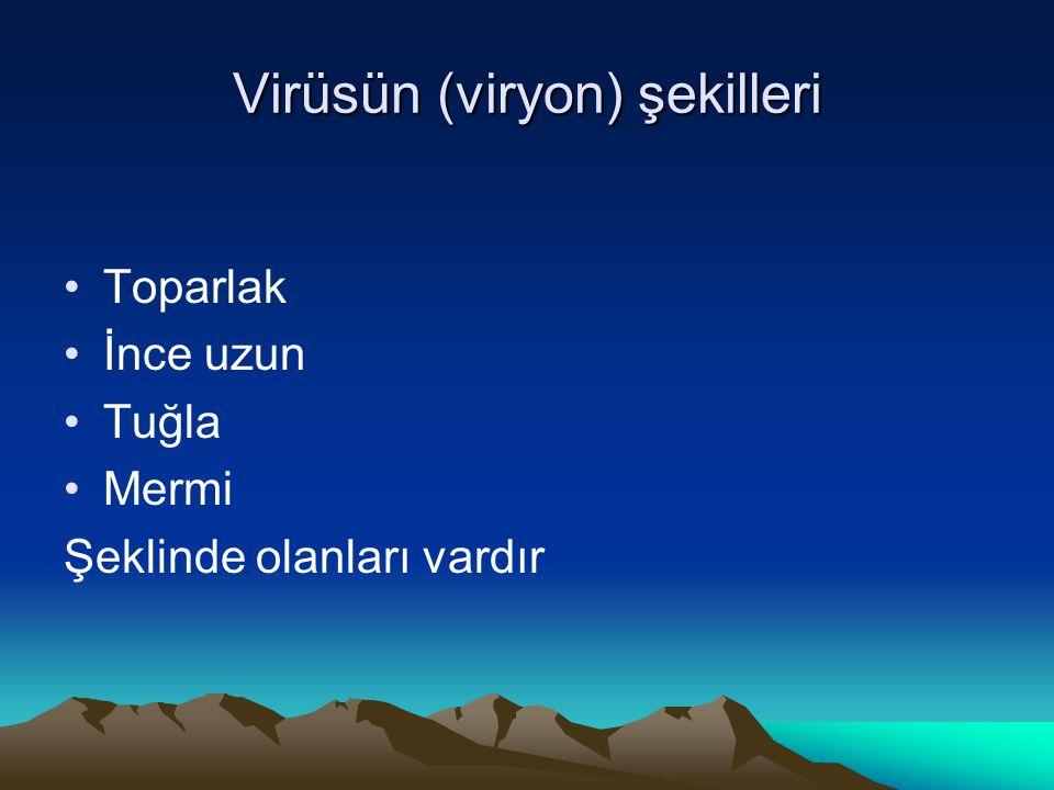 Virüsün (viryon) şekilleri Toparlak İnce uzun Tuğla Mermi Şeklinde olanları vardır