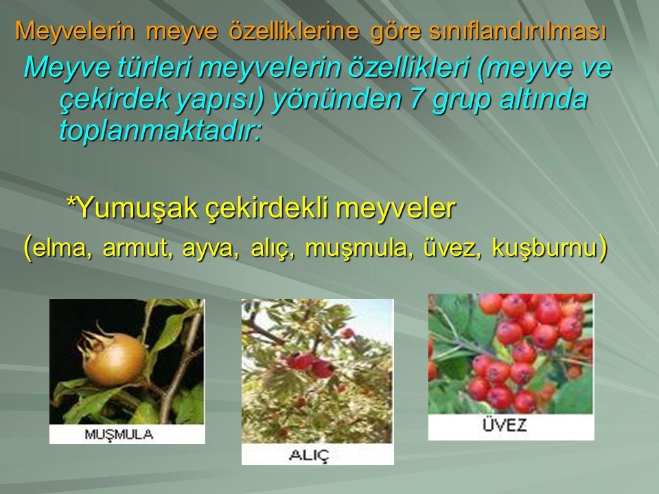 Meyvelerin meyve özelliklerine göre sınıflandırılması Meyve türleri meyvelerin özellikleri (meyve ve çekirdek yapısı) yönünden 7 grup altında toplanmaktadır: *Yumuşak çekirdekli meyveler (elma, armut, ayva, alıç, muşmula, üvez, kuşburnu)