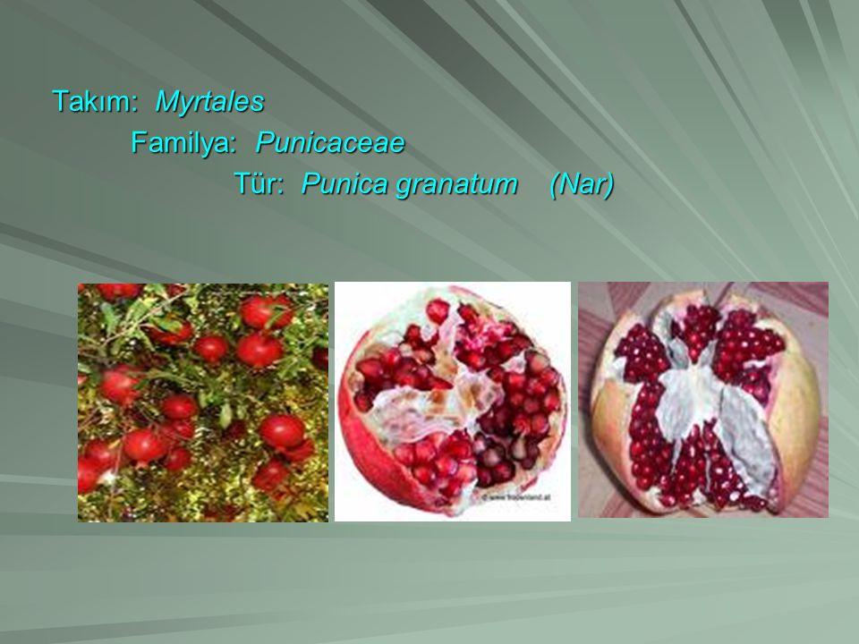 Takım: Myrtales Familya: Punicaceae Familya: Punicaceae Tür: Punica granatum (Nar) Tür: Punica granatum (Nar)