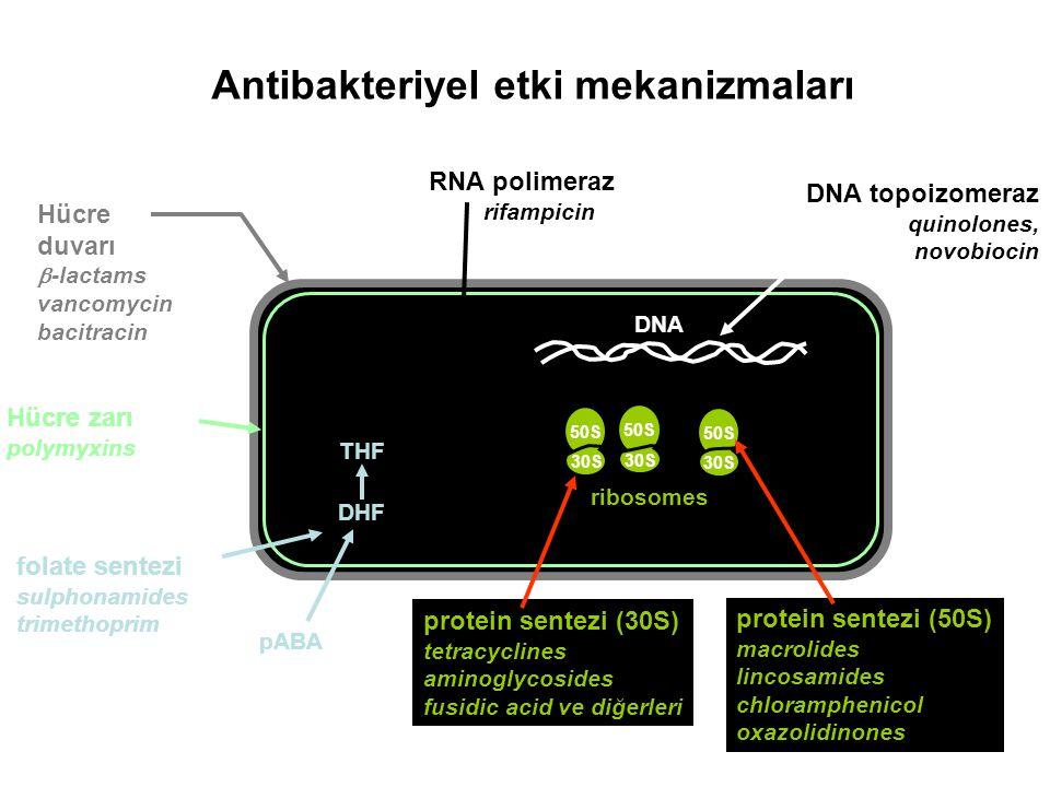 50S 30S 50S 30S Antibakteriyel etki mekanizmaları 50S 30S DNA mRNA ribosomes THF DHF pABA folate sentezi sulphonamides trimethoprim DNA topoizomeraz q