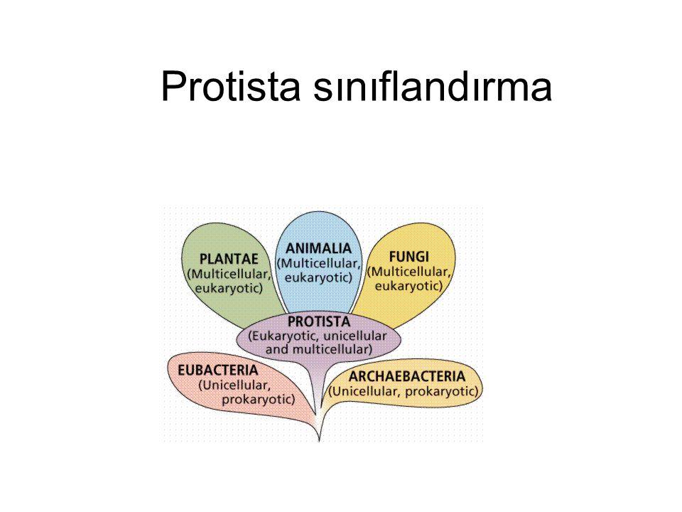 Protista sınıflandırma