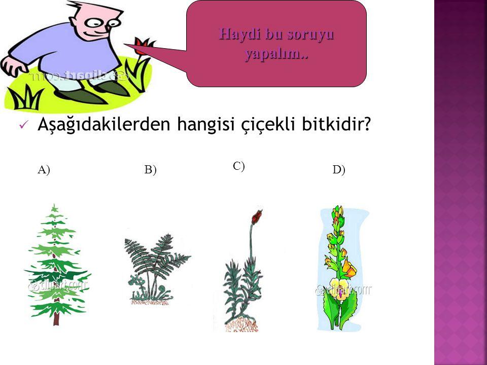 Aşağıdakilerden hangisi çiçekli bitkidir? A)B) C) D) Haydi bu soruyu yapalım..