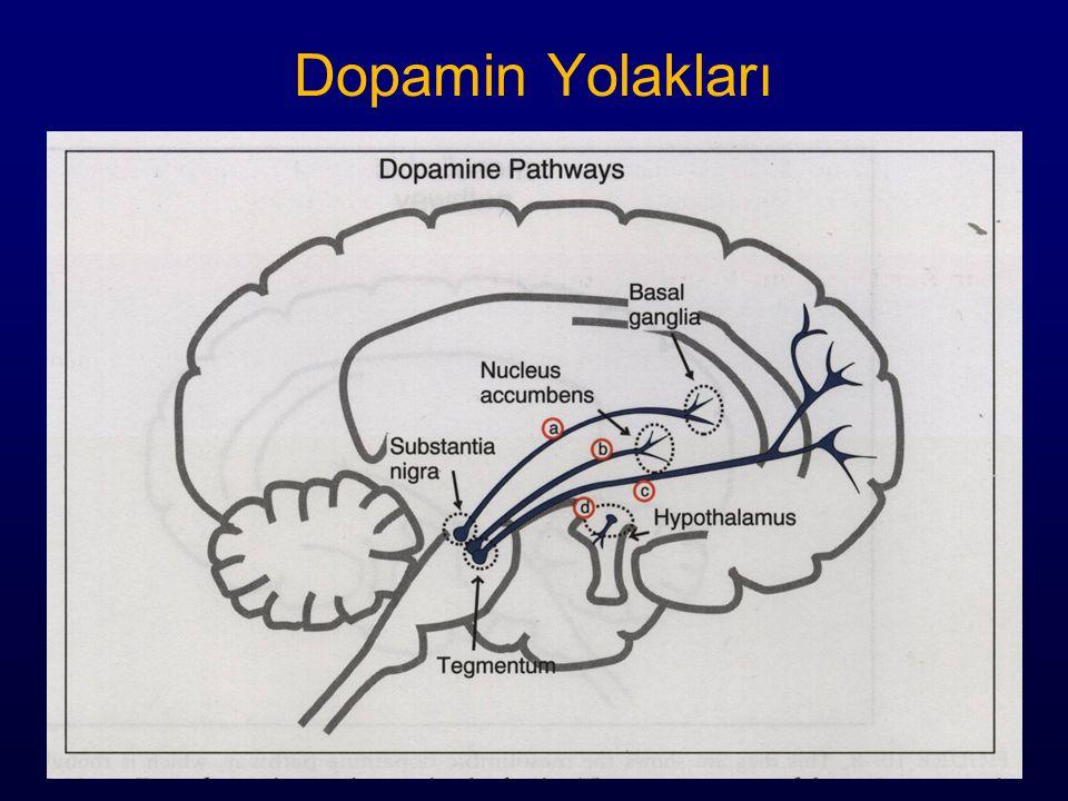 Dopamin Yolakları