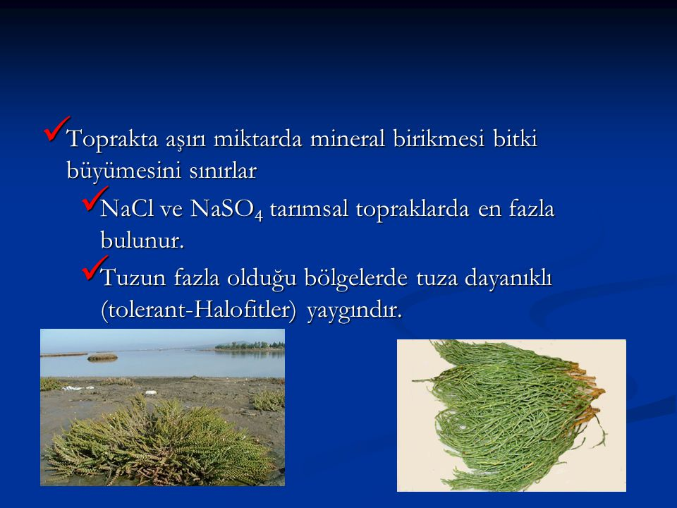 Toprakta aşırı miktarda mineral birikmesi bitki büyümesini sınırlar Toprakta aşırı miktarda mineral birikmesi bitki büyümesini sınırlar NaCl ve NaSO 4