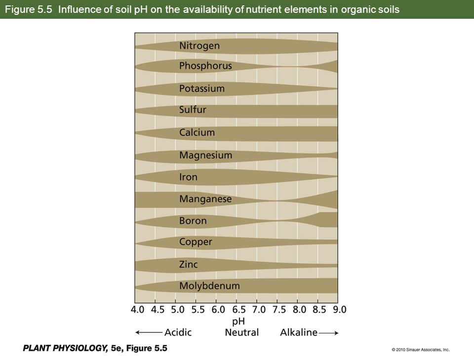 Figure 5.5 Influence of soil pH on the availability of nutrient elements in organic soils