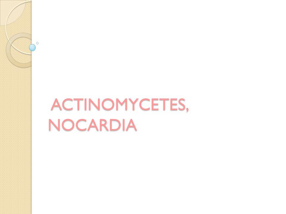 ÖzelliklerN.asteroides N. farcinica N. nova N. brasiliensis N.