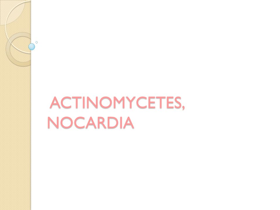 ACTINOMYCETES, NOCARDIA ACTINOMYCETES, NOCARDIA