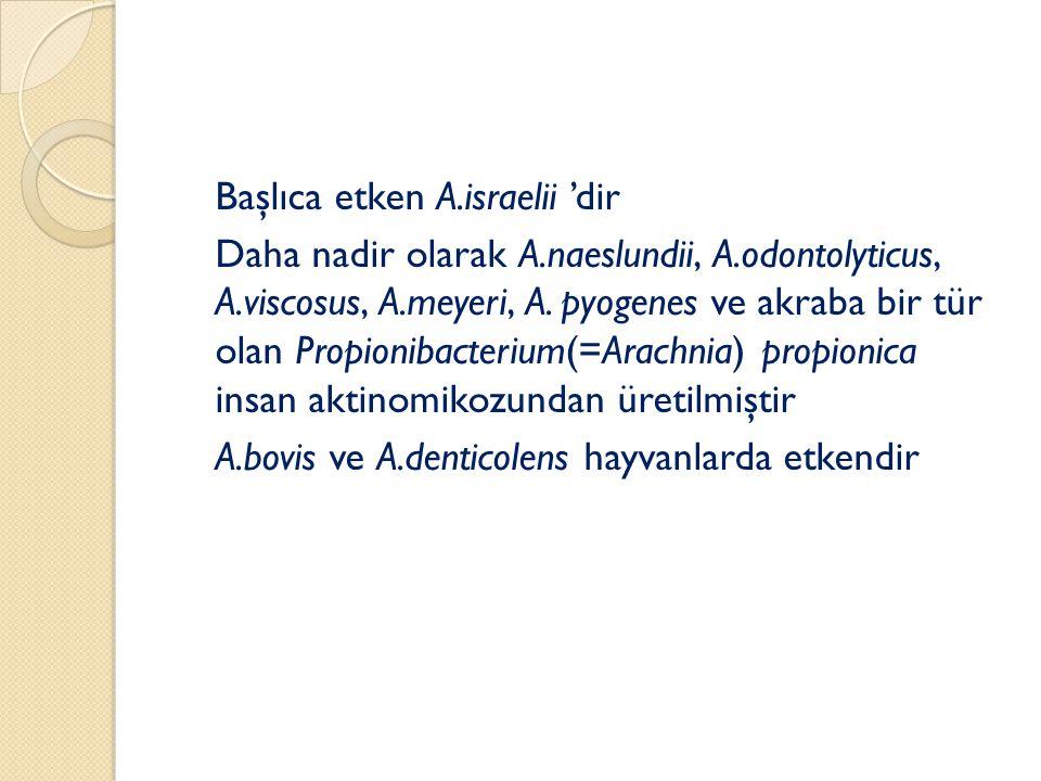 Başlıca etken A.israelii 'dir Daha nadir olarak A.naeslundii, A.odontolyticus, A.viscosus, A.meyeri, A.