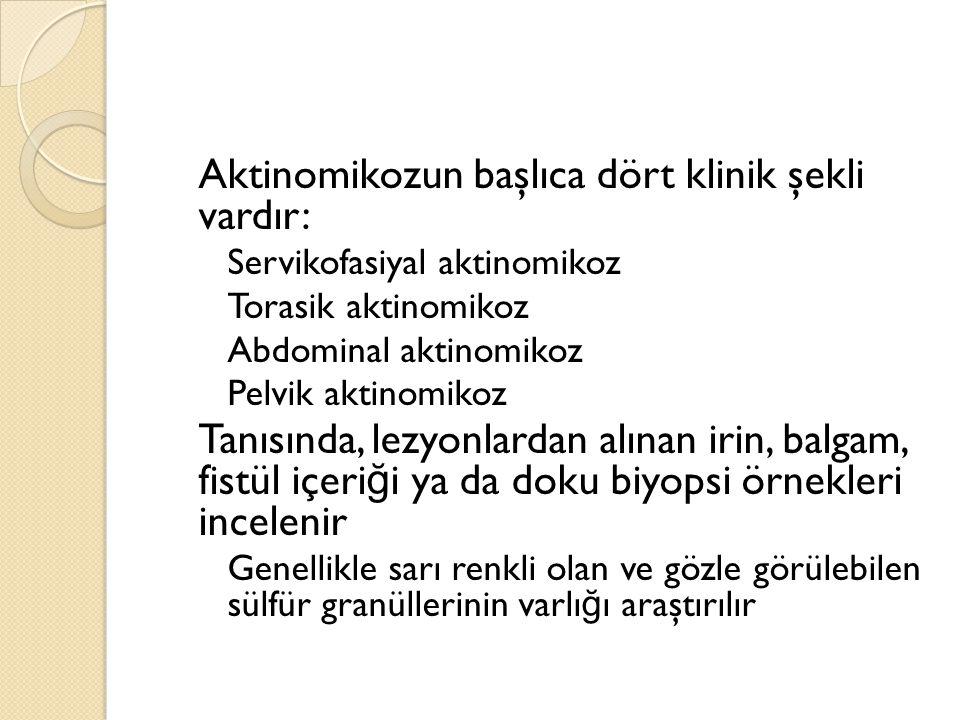 Aktinomikozun başlıca dört klinik şekli vardır: ◦ Servikofasiyal aktinomikoz ◦ Torasik aktinomikoz ◦ Abdominal aktinomikoz ◦ Pelvik aktinomikoz Tanısında, lezyonlardan alınan irin, balgam, fistül içeri ğ i ya da doku biyopsi örnekleri incelenir ◦ Genellikle sarı renkli olan ve gözle görülebilen sülfür granüllerinin varlı ğ ı araştırılır