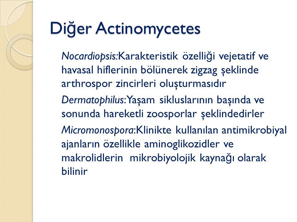 Di ğ er Actinomycetes Nocardiopsis:Karakteristik özelli ğ i vejetatif ve havasal hiflerinin bölünerek zigzag şeklinde arthrospor zincirleri oluşturmasıdır Dermatophilus:Yaşam sikluslarının başında ve sonunda hareketli zoosporlar şeklindedirler Micromonospora:Klinikte kullanılan antimikrobiyal ajanların özellikle aminoglikozidler ve makrolidlerin mikrobiyolojik kayna ğ ı olarak bilinir
