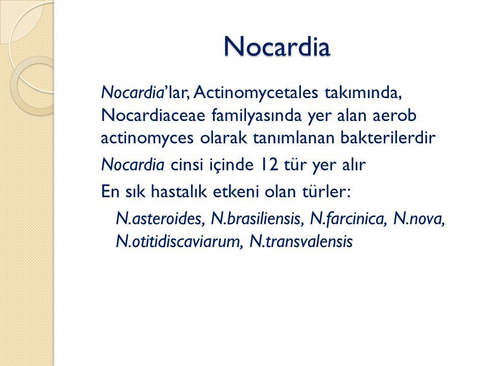 Nocardia Nocardia'lar, Actinomycetales takımında, Nocardiaceae familyasında yer alan aerob actinomyces olarak tanımlanan bakterilerdir Nocardia cinsi içinde 12 tür yer alır En sık hastalık etkeni olan türler: ◦ N.asteroides, N.brasiliensis, N.farcinica, N.nova, N.otitidiscaviarum, N.transvalensis