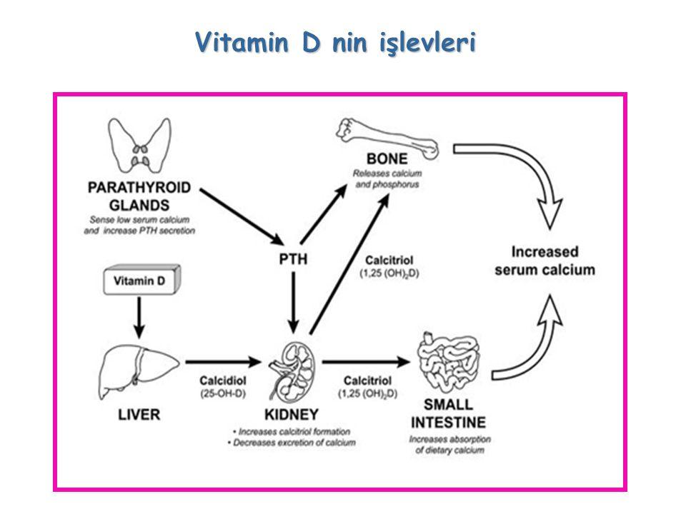 Vitamin D nin işlevleri