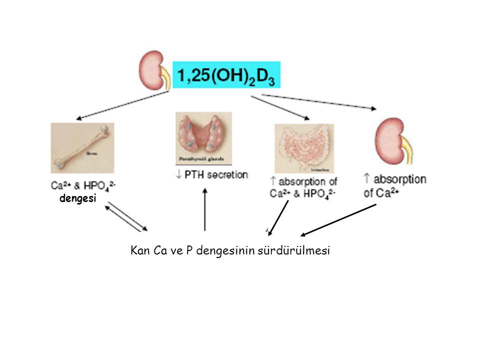 Kan Ca ve P dengesinin sürdürülmesi dengesi