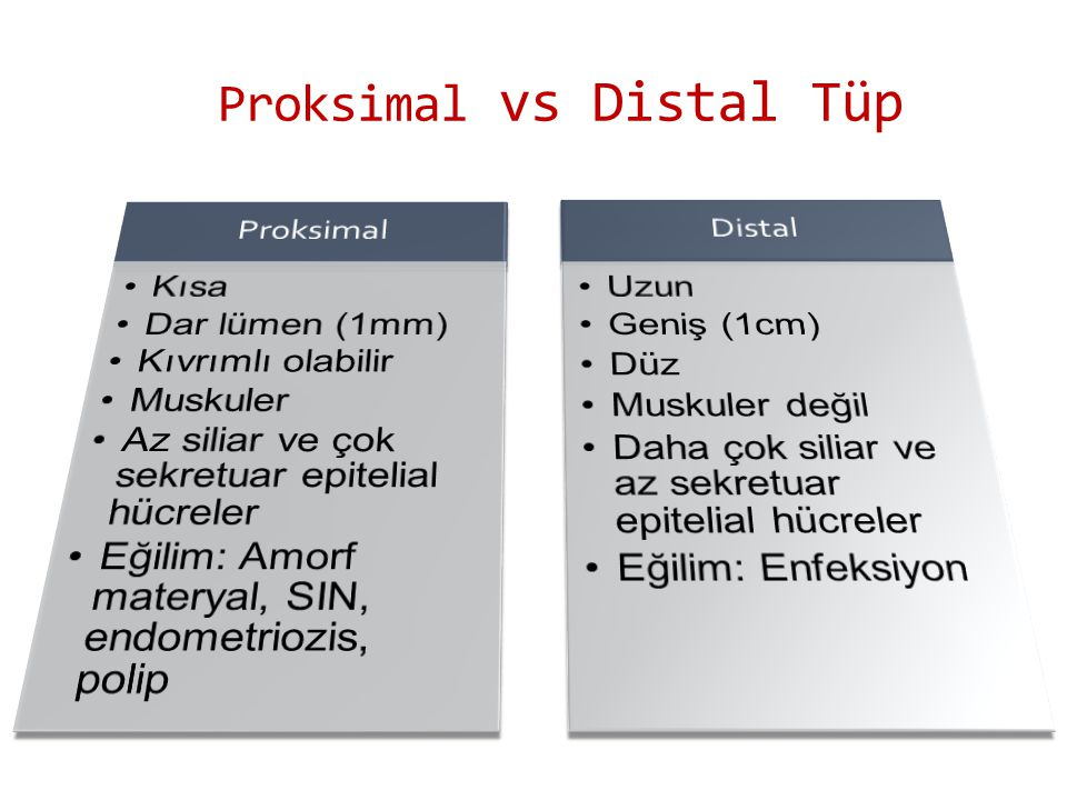 Proksimal vs Distal Tüp