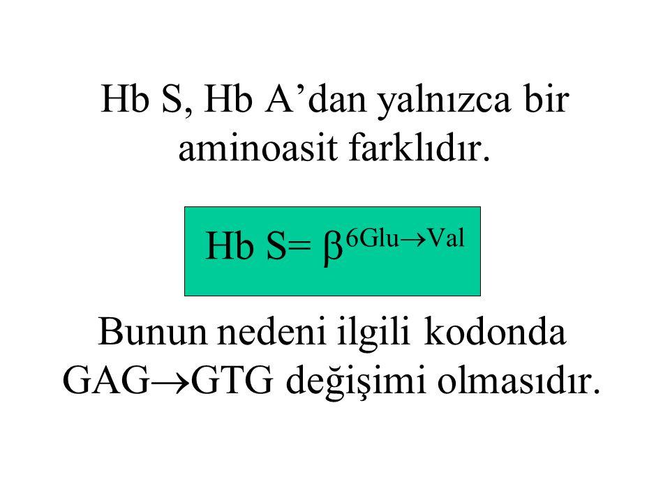 Hb S, Hb A'dan yalnızca bir aminoasit farklıdır.