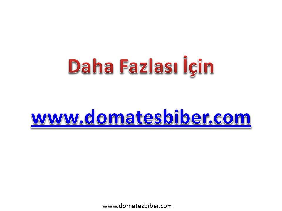 www.domatesbiber.com