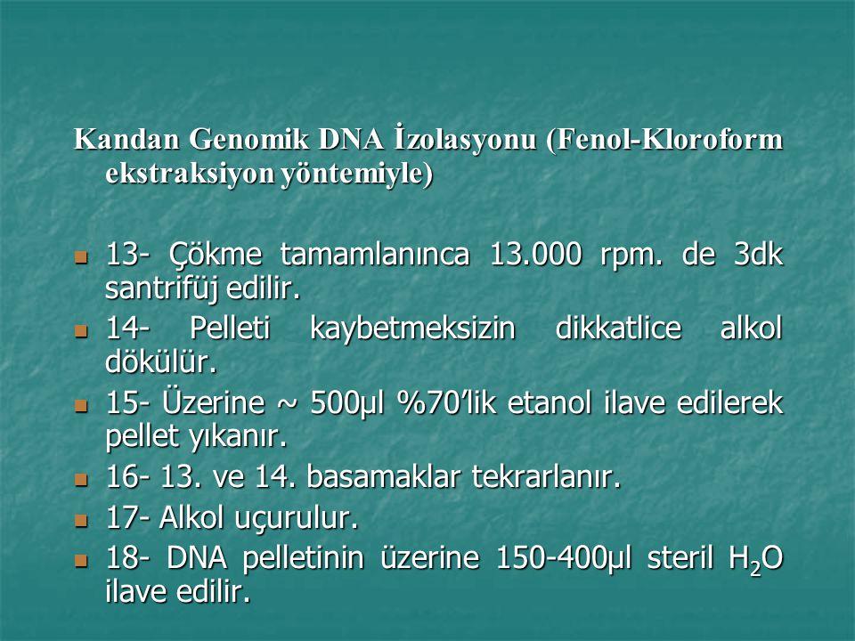 Kandan Genomik DNA İzolasyonu (Fenol-Kloroform ekstraksiyon yöntemiyle) 13- Çökme tamamlanınca 13.000 rpm.