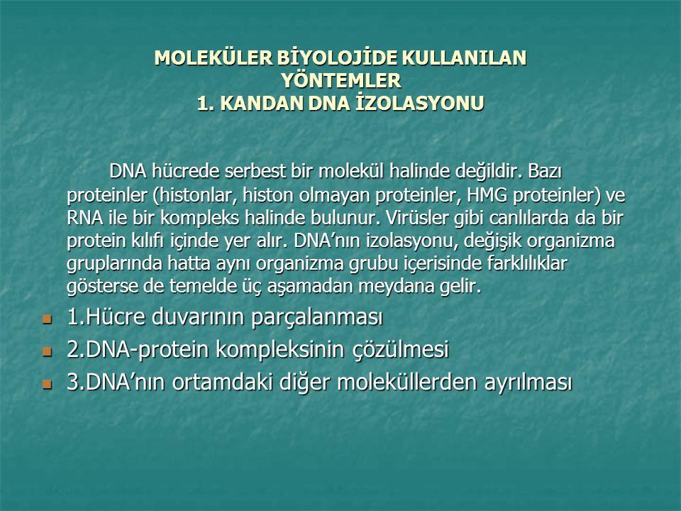MOLEKÜLER BİYOLOJİDE KULLANILAN YÖNTEMLER 1.