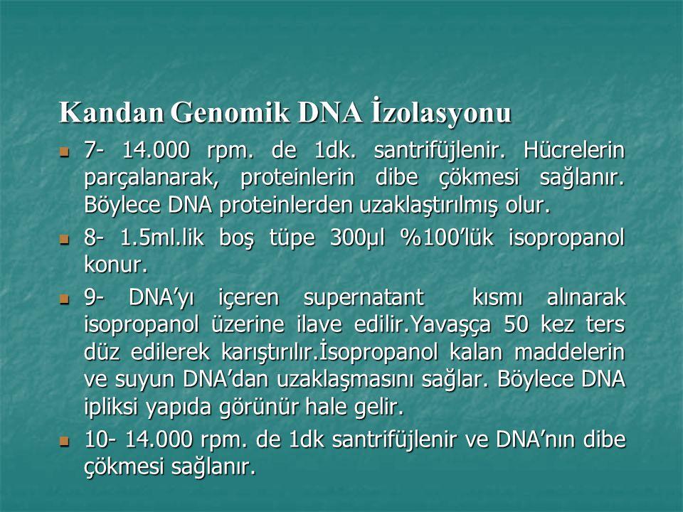 Kandan Genomik DNA İzolasyonu 7- 14.000 rpm.de 1dk.