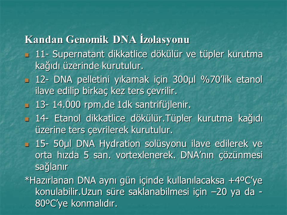Kandan Genomik DNA İzolasyonu 11- Supernatant dikkatlice dökülür ve tüpler kurutma kağıdı üzerinde kurutulur.