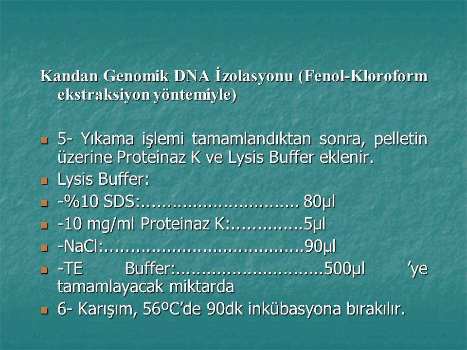 Kandan Genomik DNA İzolasyonu (Fenol-Kloroform ekstraksiyon yöntemiyle) 5- Yıkama işlemi tamamlandıktan sonra, pelletin üzerine Proteinaz K ve Lysis Buffer eklenir.