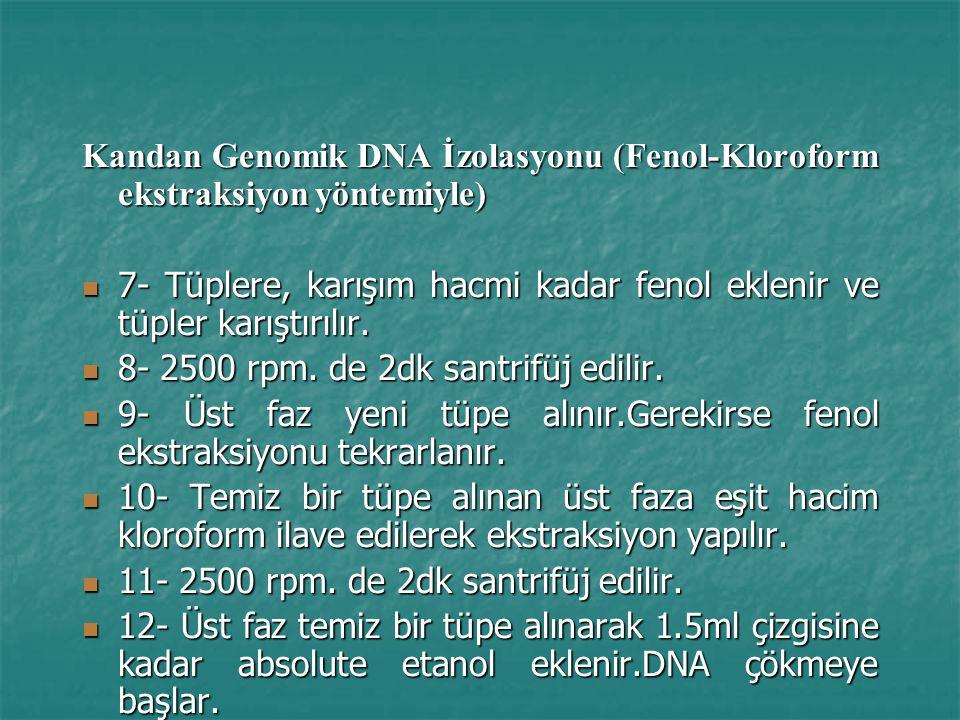 Kandan Genomik DNA İzolasyonu (Fenol-Kloroform ekstraksiyon yöntemiyle) 7- Tüplere, karışım hacmi kadar fenol eklenir ve tüpler karıştırılır.