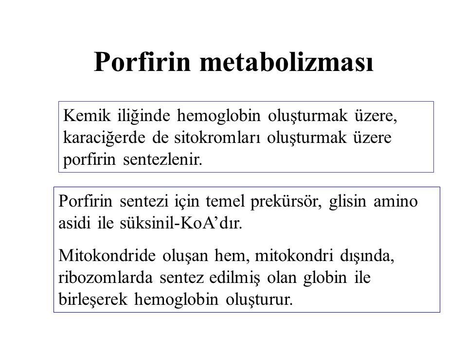 Porfirin metabolizması Kemik iliğinde hemoglobin oluşturmak üzere, karaciğerde de sitokromları oluşturmak üzere porfirin sentezlenir. Porfirin sentezi