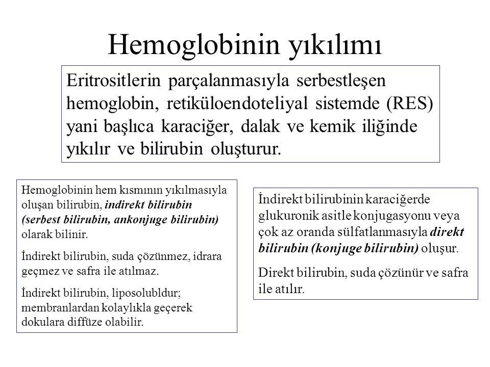 Hemoglobinin yıkılımı Eritrositlerin parçalanmasıyla serbestleşen hemoglobin, retiküloendoteliyal sistemde (RES) yani başlıca karaciğer, dalak ve kemi