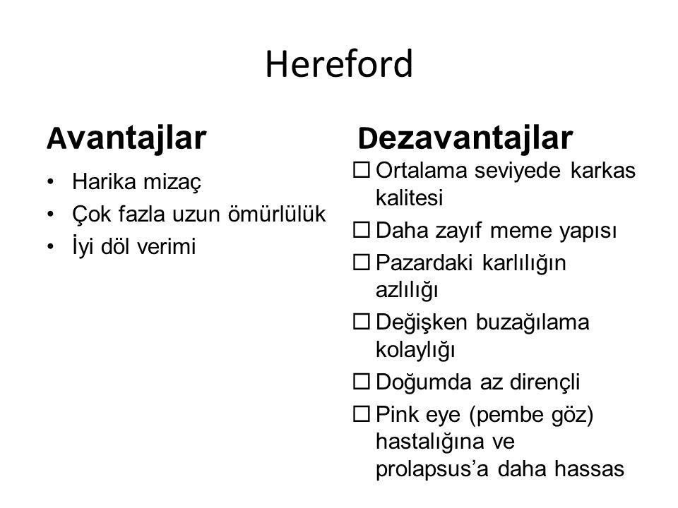 Hereford Harika mizaç Çok fazla uzun ömürlülük İyi döl verimi  Ortalama seviyede karkas kalitesi  Daha zayıf meme yapısı  Pazardaki karlılığın azlı